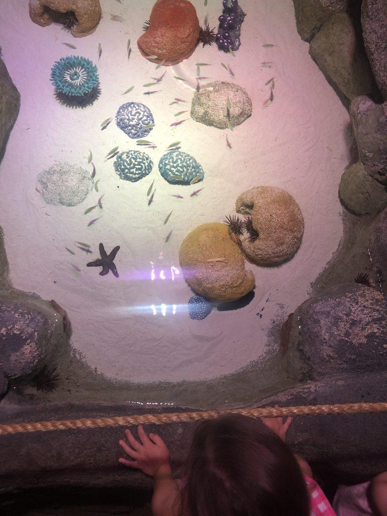 Sea Life Kansas City_touching the star fish