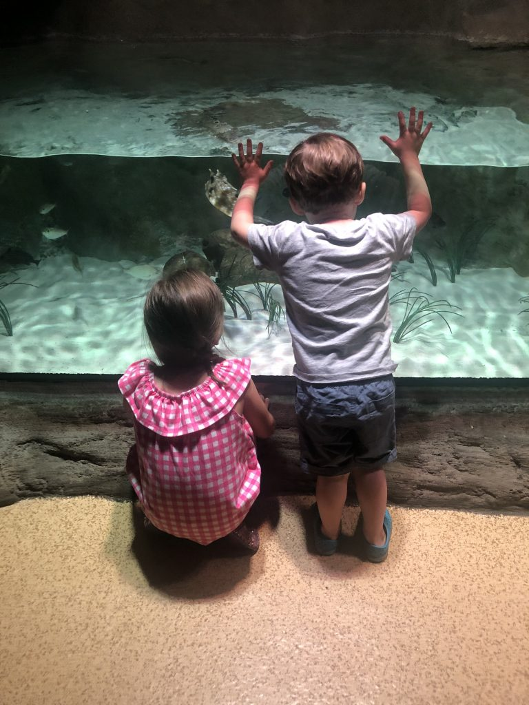 What to do with kids on vacation in KC_Sea Life Aquariaum