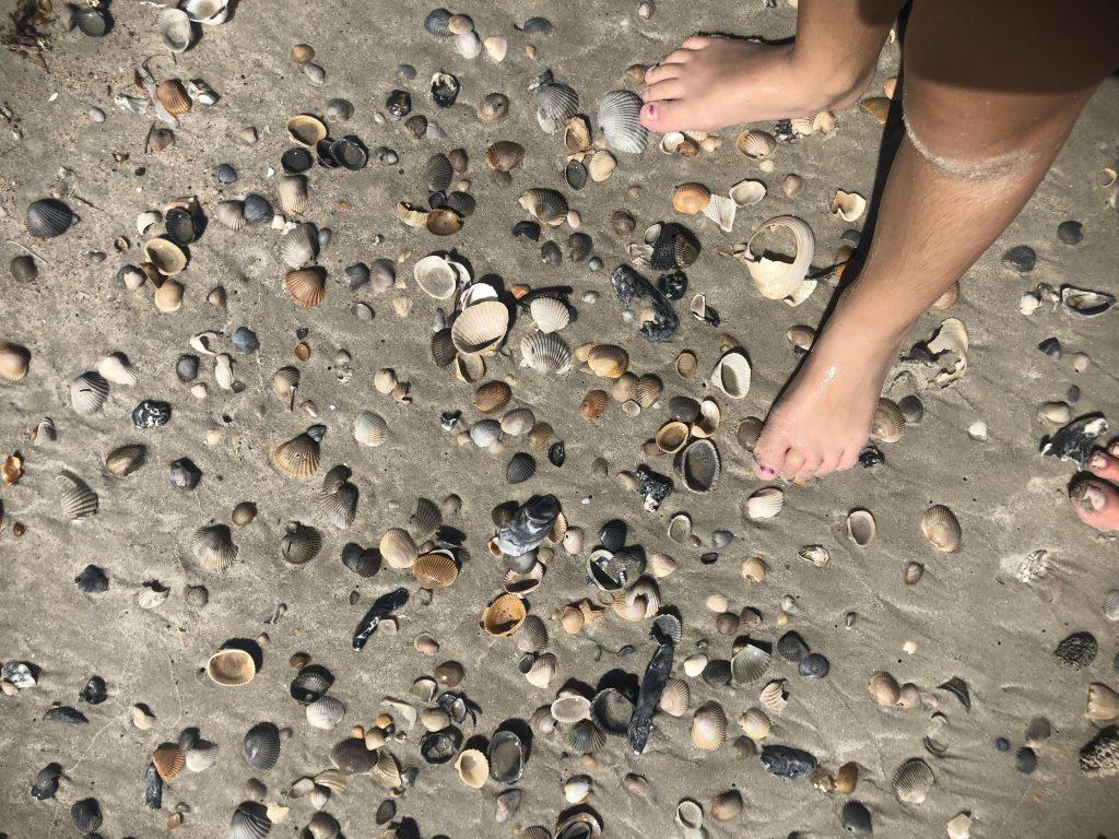 seashells on the beach in Ameila Island Florida