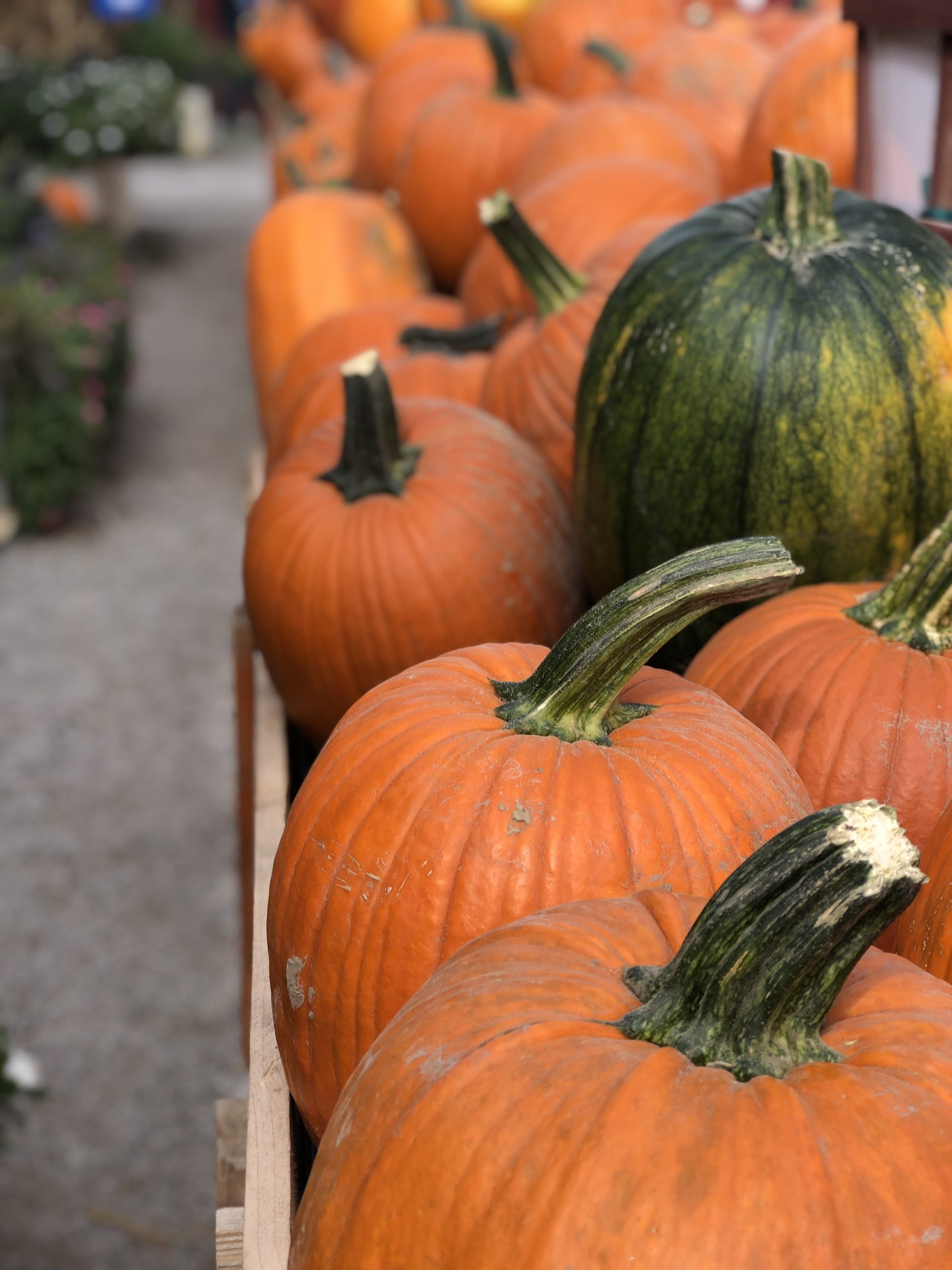 Things to do in the fall in Saint Louis
