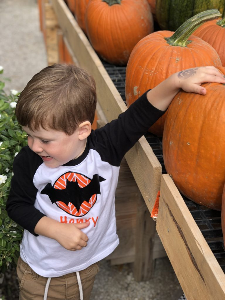 pumpkin patches to visit in St. Louis